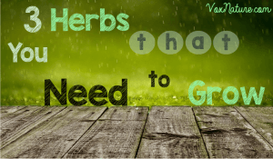 3 Herbs that You Need to Grow