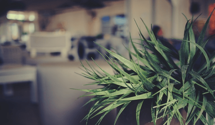 7 Household Plants that Improve Indoor Air Quality