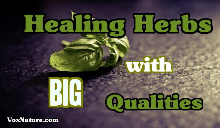 7 Belittled Healing Herbs with Big Qualities