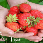 Keeping Your Garden Healthy (Tips for Novice Gardeners)