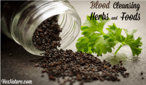 9 Herbs and Foods with Blood Cleansing Properties