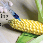 How to Avoid GMOs: Food Poison