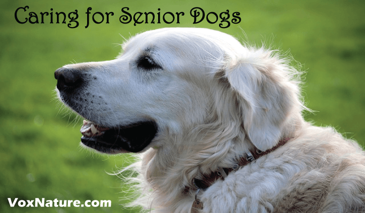 Natural Remedies and Supplements for Senior Dogs