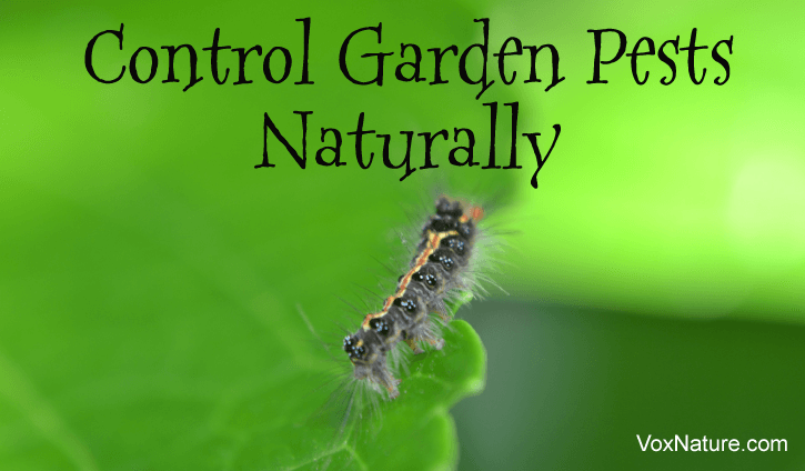 Eradicating Garden Pests Without the Use of Chemicals