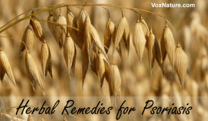 Effective Herbal Remedies for Psoriasis