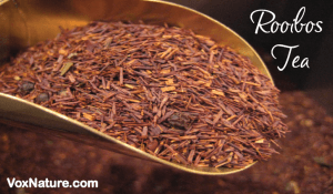 Drinking for Good Health: Rooibos Tea