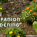 The Dos and Don'ts of Companion Gardening