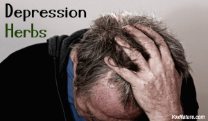 10 Best Herbs for Treating Depression