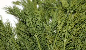 Health Benefits of Dill (Anethum Graveolens)