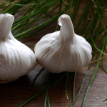 Health Benefits of Garlic (Allium Sativum)