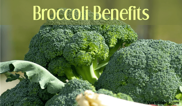 10 Reasons You Should Add Broccoli To Your Diet