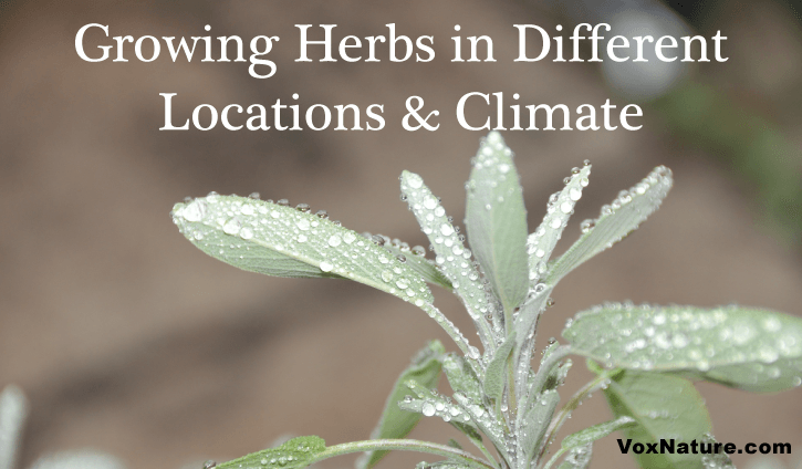 Herbs that Grow Better in Various Locations & Climate