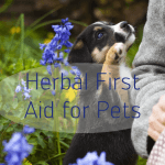 Herbal First Aid Remedies for Pets