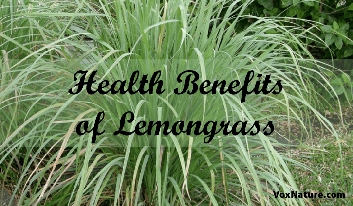 8 Ways Lemongrass Benefits Your Health