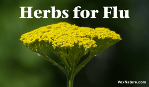 Potent Medicinal Herbs for Fighting Flu