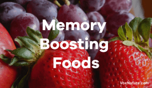 15 Healthy Brain Foods to Improve Memory