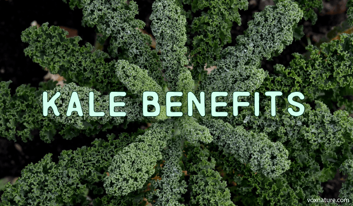 Health Benefits of Kale (Brassica oleracea)