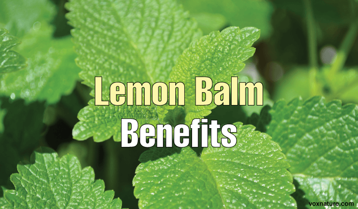 Health Benefits and Uses of Lemon Balm