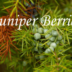 Health Benefits of Juniper Berries (Juniperus virginiana)