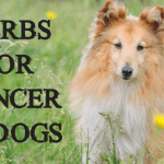 Herbs to Suppress Cancer Cells (in dogs)