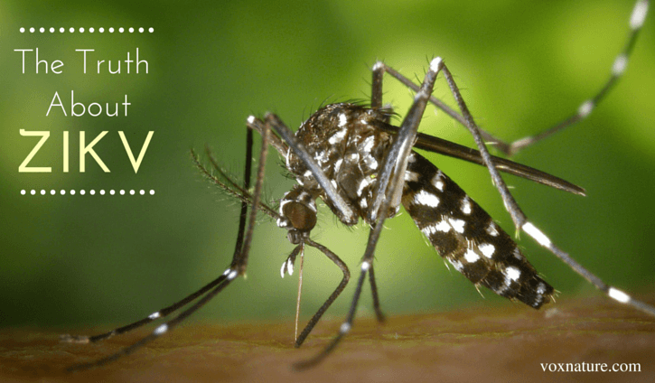 Zika Virus Outbreak Possibly Sparked by Genetically Modified Mosquitoes