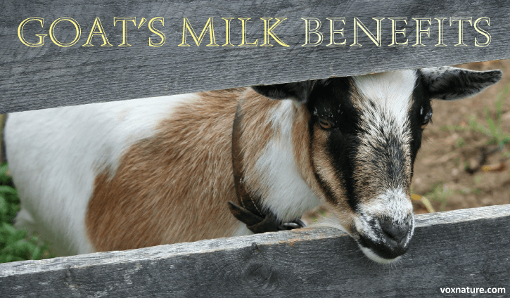 Why Goat's Milk is a Much Healthier Alternative to Cow's Milk