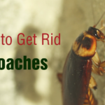 8 Natural Approaches to Get Rid of Roaches