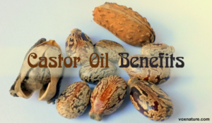9 Reasons Castor Oil Deserves a Place in Every Home