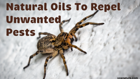5 Natural Oils To Repel Unwanted Pests From Your Home & Garden