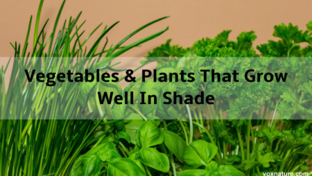 10 Vegetables and Herbs That Grow Well In Shade