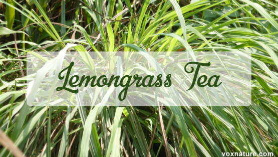Health Benefits of Lemongrass Tea
