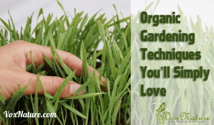 There is nothing like being able to walk out into your yard and pick your own fresh Organic Gardening Techniques You'll Simply Love