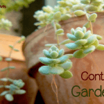 Should You Container Garden?