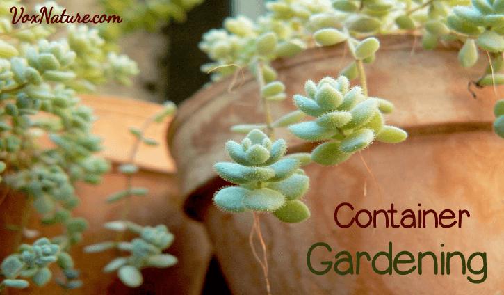 Container gardening can be a rewarding and fun process Should You Container Garden?