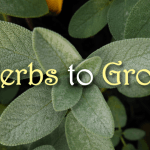 12 Herbs that You Need to Grow