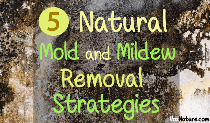 Natural Mold and Mildew Removal Strategies 5 Natural Mold and Mildew Removal Strategies