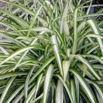 Household Plants that Improve Indoor Air Quality 7 Household Plants that Improve Indoor Air Quality