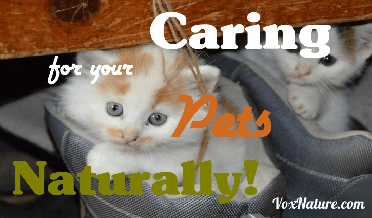There are plenty of options to provide better care to your household pets to give them a h Caring for Your Pets Naturally