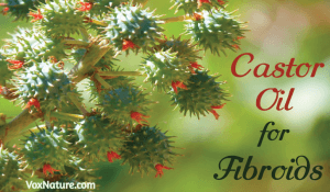 Castor Oil for Fibroids | Ovarian Cysts