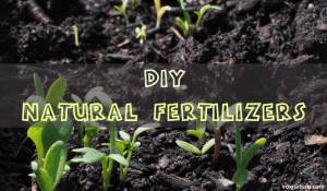 DIY Fertilizers made from Natural Ingredients