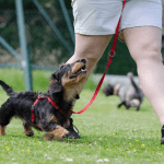 Top 3 Dog Natural Health Resources