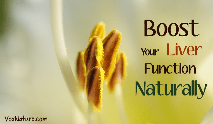 How You Can Boost Your Liver Function Naturally How You Can Boost Your Liver Function Naturally