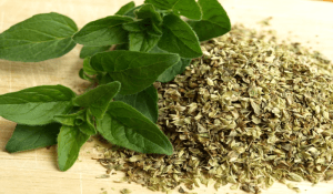 Oregano: A Super Herb!