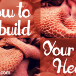 How To Rebuild Your Gut Health