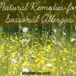 6 Natural Remedies to Relieve Seasonal Allergies