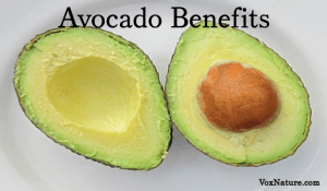 7 Reasons Avocado Is Good For You