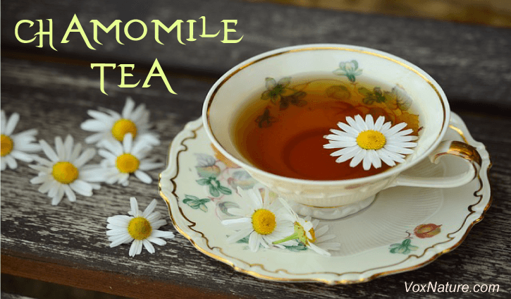 Drinking and Using Chamomile Tea For Good Health Drinking and Using Chamomile Tea For Good Health