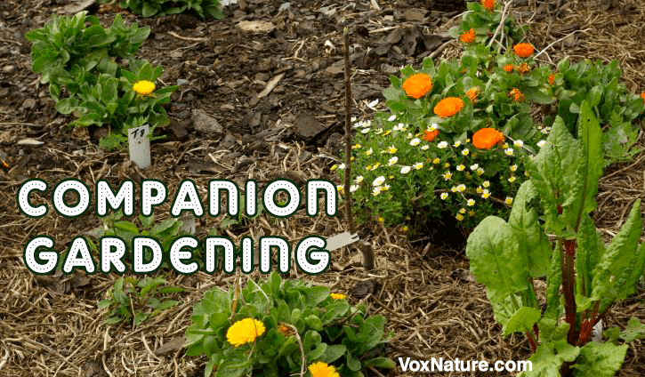 Gardeners know that companion planting can benefit many of your individual plants The Dos and Don'ts of Companion Gardening