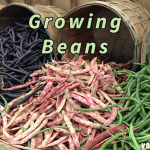 How to Properly Grow and Plant Beans