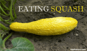 Eating Squash for Good Health